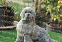 Newfoundland köpeği özellikleri, tarihçesi ve karakter yapısı
